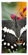 Citrus Swallowtail Butterfly  Beach Towel