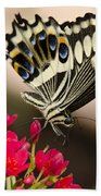 Citrus Swallowtail  Beach Towel