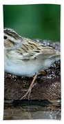 Clay-colored Sparrow Spizella Pallida Beach Towel