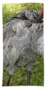 Cleaning  Feathers Beach Towel