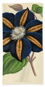 Clematis Star Of India Beach Towel