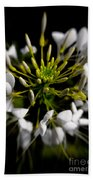 Cleome In Bloom Beach Towel
