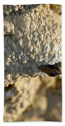 Cliff Swallow About To Fledge Beach Towel