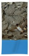 Cliff Swallows At Nests Beach Towel