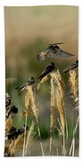 Cliff Swallows Perched On Grasses Beach Towel
