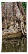 Clinging Cypress Beach Towel