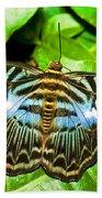Clipper Butterfly Beach Towel