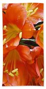 Music Please Clivia Beach Towel