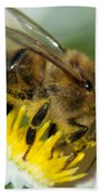 Close Encounter Of The Bee Kind Beach Towel