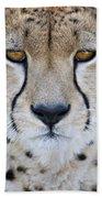 Close-up Of A Cheetah Acinonyx Jubatus Beach Towel