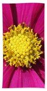 Close Up Of A Cosmos Flower Beach Towel