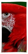 Close Up Of A Gorgeous  Green Winged Macaw Parrot. Beach Towel