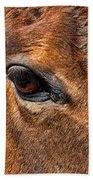 Close Up Of A Horse Eye Beach Towel by Paul Ward