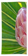 Close Up Of A Protea In Bud Beach Towel