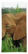 Close Up Of African Elephant Beach Towel
