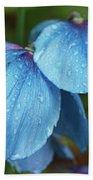 Close-up Of Himalayan Poppy Flowers Beach Sheet