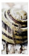 Close Up Of Sea Shell Beach Towel by Tommytechno Sweden