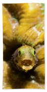 Close-up Spinyhead Blenny Beach Towel