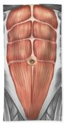 Close-up View Of Male Abdominal Muscles Beach Sheet