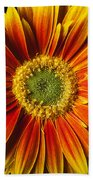 Close Up Yellow Orange Mum Beach Towel
