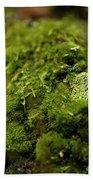 Closeup Of Moss And Lichen. Rhoen Beach Towel