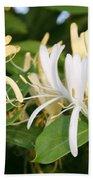 Closeup Shot Of Lonicera European Honeysuckle Flower Beach Towel