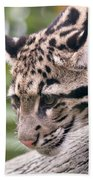 Clouded Leopard Cub Beach Towel