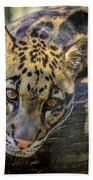 Clouded Leopard Beach Towel