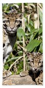 Clouded Leopards Beach Towel