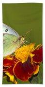 Clouded Sulphur Butterfly Beach Sheet