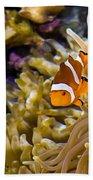 Clownfish Beach Towel