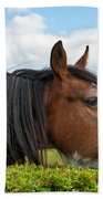 Clydesdale Horse Munching Beach Towel