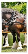Clydesdale Horses Beach Towel