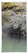 Coast Ecosystems Beach Towel