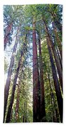 Coastal Redwoods Reach For The Sky In Armstrong Redwoods State Preserve Near Guerneville-ca Beach Towel