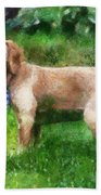 Cocker Spaniel Outside 07 Beach Towel