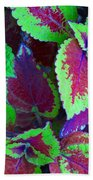 Coleus Color Beach Towel