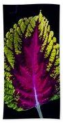 Coleus Leaf Beach Towel