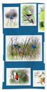 Collage Of Dauphin Island 22 Beach Towel