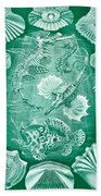 Collection Of Teleostei Beach Towel by Ernst Haeckel