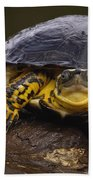 Colombian Wood Turtle Amazon Ecuador Beach Towel