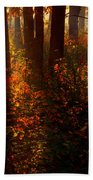 Color On The Forest Floor Beach Towel