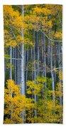 Colorado Fall Color Beach Towel