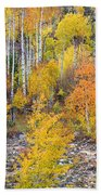 Colorful Autumn Forest In The Canyon Of Cottonwood Pass Beach Towel