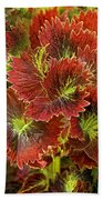 Colorful Coleus Beach Towel