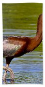 Colorful Glossy Ibis Beach Towel