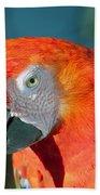 Colorful Parrot Beach Towel