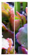 Colorful Succulents In Stereo Beach Towel