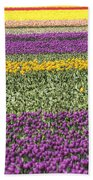 colorful tulips in Holland Beach Towel
