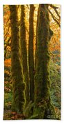 Colors In The Rainforest Beach Towel by Adam Jewell